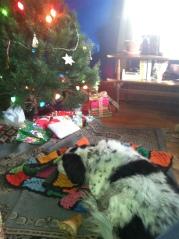 Bindu enjoying Christmas pack time